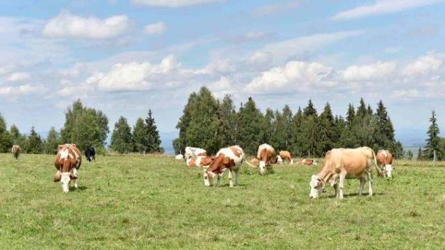 Decret prezidențial: Primăriile sunt obligate să atribuie pășunile către crescătorii de animale!
