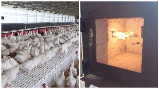 Autorizarea a două incineratoare de păsări pune pe jar locuitorii de lângă fermele de la Crevedia