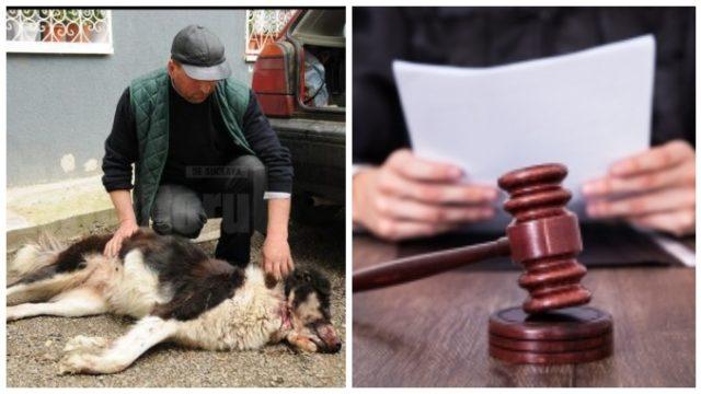 Vânător condamnat la închisoare după ce a împușcat câinii unui cioban!