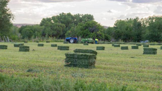 ORDIN MADR: Scutire de impozit pentru crescătorii de animale care cultivă teren agricol!