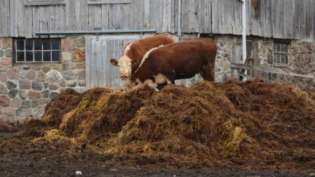 Legea gunoiului de grajd – în Parlament! Noi obligații și amenzi stabilite de Consiliile Locale!