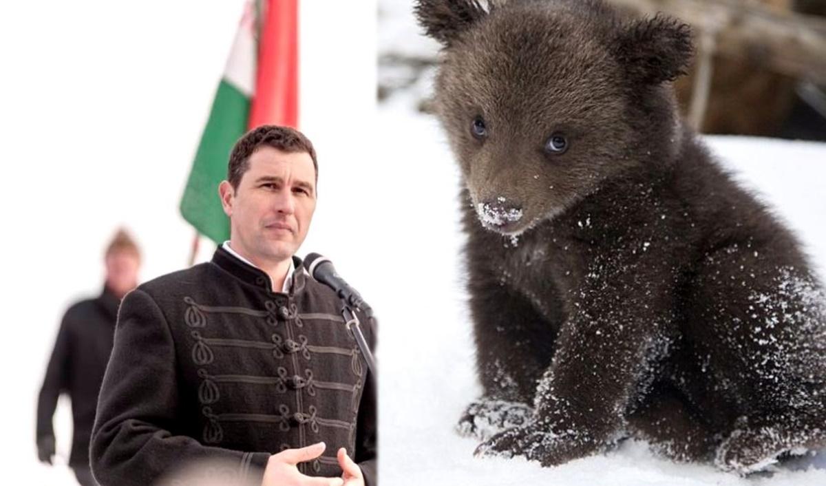 Sinistrul Mediului și UDMR fac presiuni la Bruxelles pentru uciderea urșilor carpatini