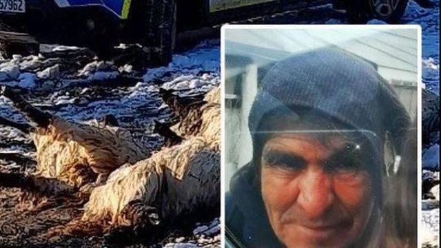 Apel pentru găsirea ciobanului dat dispărut după ce oile de care se îngrijea au fost găsite înecate