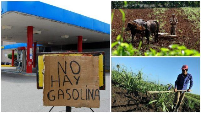 Criza de motorină i-a obligat pe fermierii din Venezuela să se întoarcă la sapă și la carele cu boi