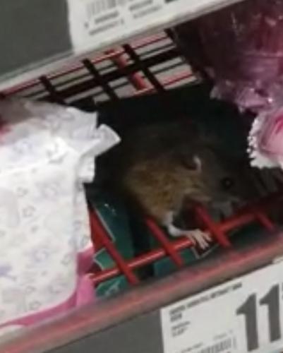 VIDEO | Un șoricel este filmat mâncând dintr-un ou Kinder în Auchan Cluj