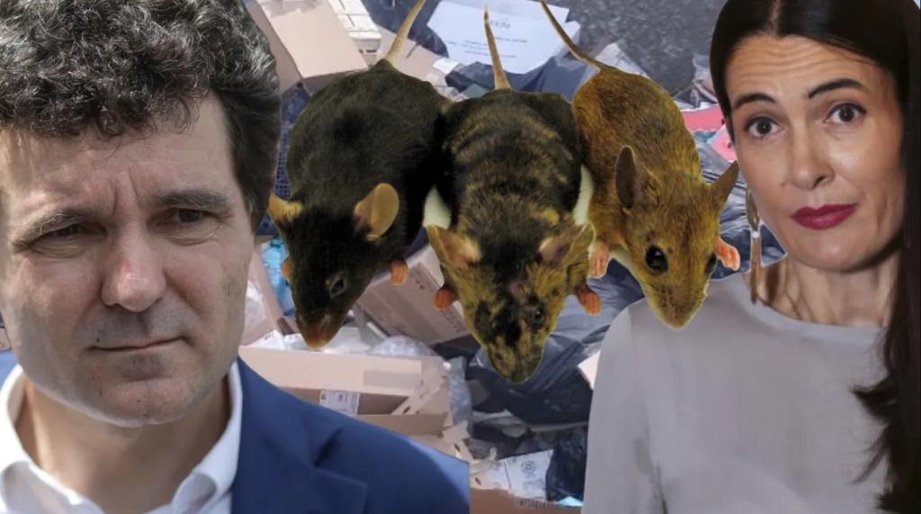 Nicușor Dan spune că nu a crescut numărul șobolanilor în București – 60m.ro