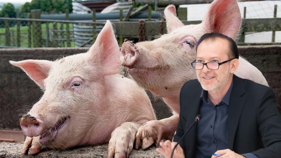 'Legea porcilor': Guvernul Cîțu interzice românilor să mai crească porci în curte