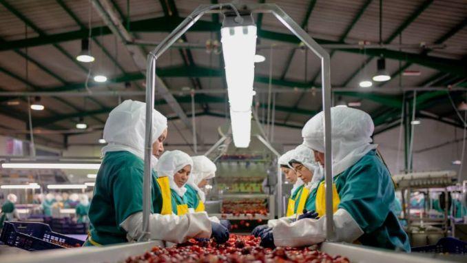 Italia, Franța și Spania au făcut plângere la Comisia Europeană împotriva importurilor de roșii –