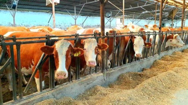 Cooperativa din România cu 220 de fermieri membri și afaceri de 10 milioane de euro pe an