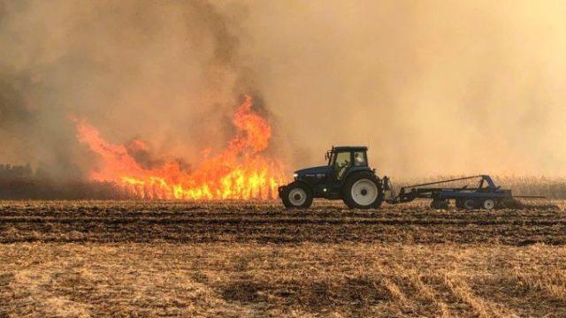 ISU: 50 de hectare de porumb – incendiate intenționat!