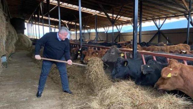 Niciodată nu ai Crăciun sau Paște la fermă! Vaca, oaia sau porcul mănâncă la fel în fiecare zi!