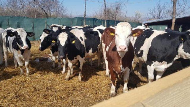 Subvenții APIA – ultimele plăți din acest an! Sume autorizate pentru crescătorii de animale!
