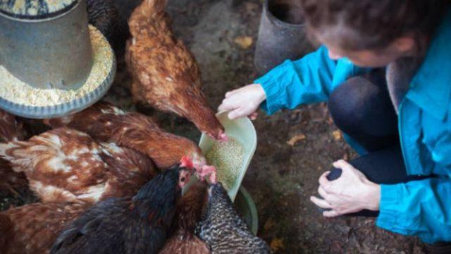 ANSVSA: Derogare pentru micii crescători! Pot vinde carnea direct la poarta fermei!