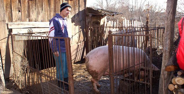 Ministerul Agriculturii a pus condiții imposibile pentru țăranii care vor să crească mai mult de cinci porci în gospodărie: Acest ordin duce la nimicirea totală a micilor producători din România
