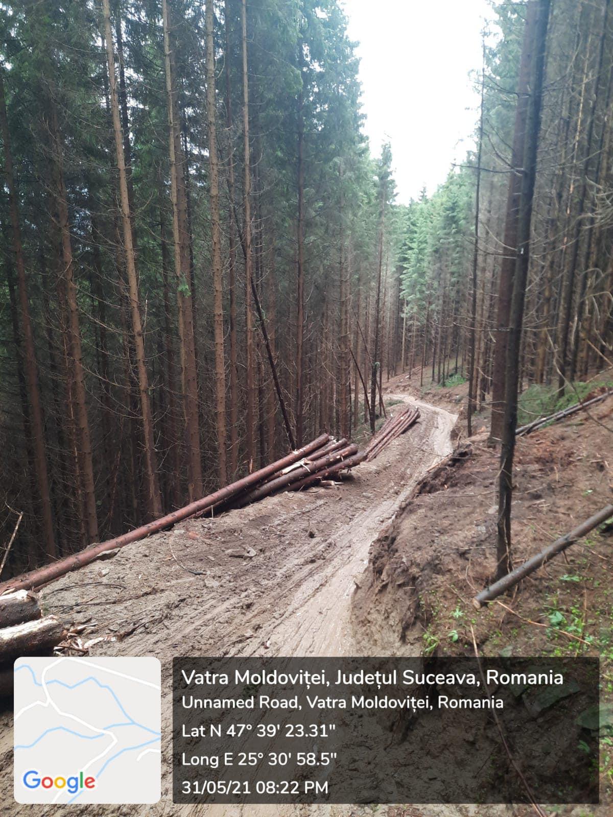 Daniel Bodnar: Jaful continuă în pădurile din Vatra Moldoviței, Suceava