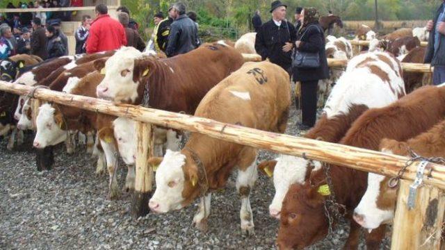Premierul Florin Cîțu – anunț pentru primari: De luna viitoare se redeschid târgurile de animale!