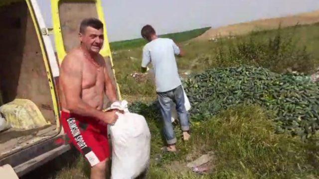 """Legumicultorii români aruncă munți de castraveți: """"I-am dona, dar nu vine nimeni să îi ia!"""""""