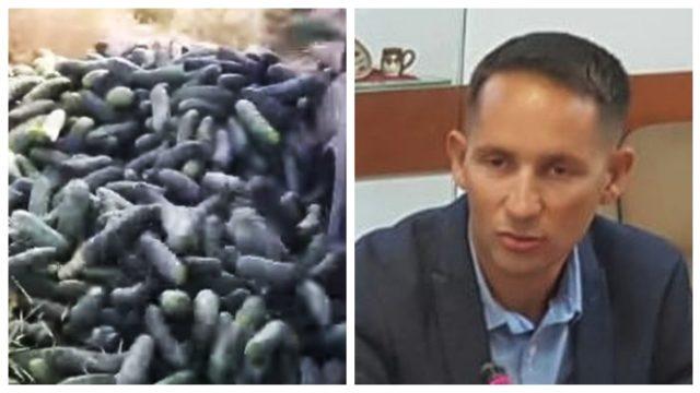 De ce își aruncă fermierii români castraveții? Un președinte de asociație explică fenomenul!