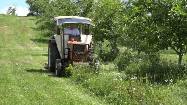 Cazul fermierului care și-a distrus recolta a determinat autoritățile să înființeze o piață pentru micii producători