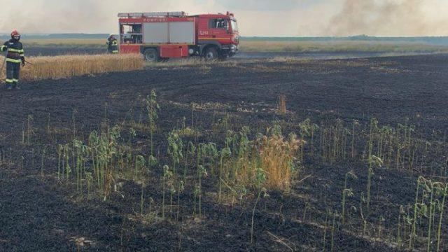 Cultură de grâu, arsă în întregime! Flăcările ar fi pornit de la o scânteie la utilajele agricole care recoltau!