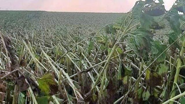 Dezastru într-un județ agricol! Ploaia torențială și furtuna au distrus culturile agricole!