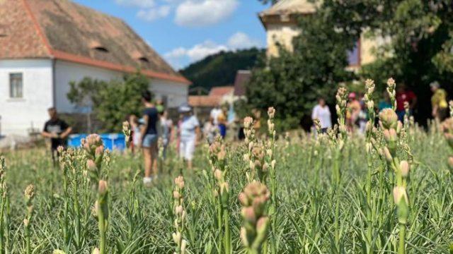 Modelul Hoghilag sau cum să pui un sat pe harta turistică a României cu 2.000 de vizitatori într-o zi