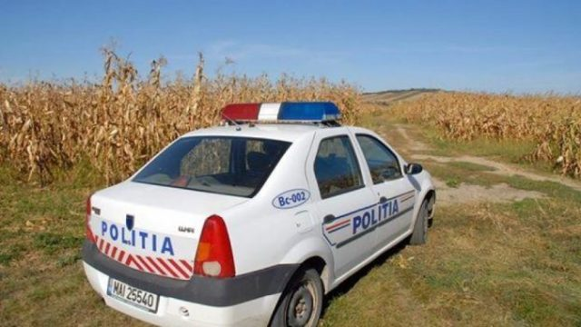 Tată și fiu, prinși de polițiști la furat porumb în lanul unui fermier