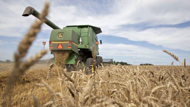 Egiptul a cumpărat grâu din Ucraina și Rusia la un preț de 264,60 euro/tonă, plus cheltuieli de transport