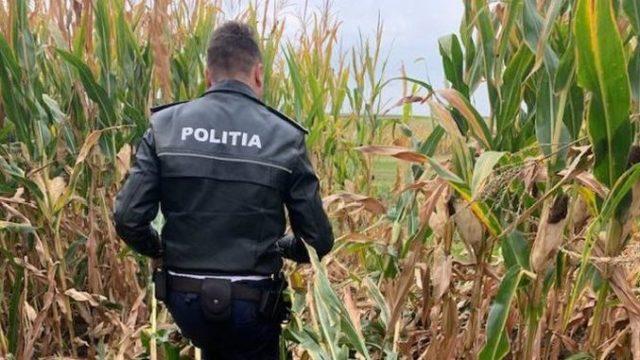 Hoții au recoltat într-o noapte zeci de tone de porumb de pe terenurile unei ferme